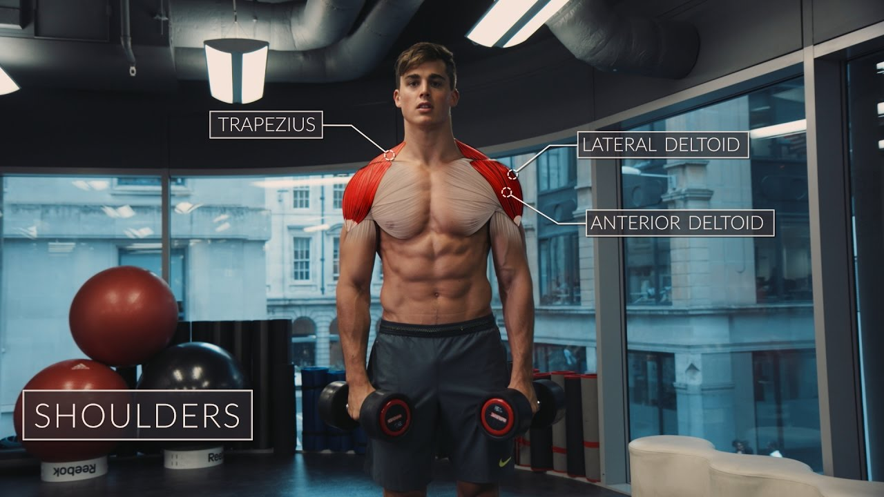 Workout Tips - Video : Exercise Anatomy: Shoulders Workout | Pietro ...