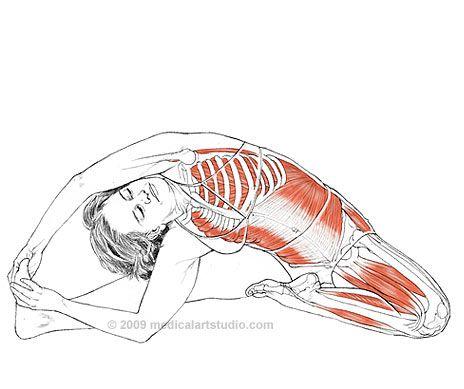 Fitness Inspiration : Parivrtta Janu Sirsasana - Leslie Kaminoff ...