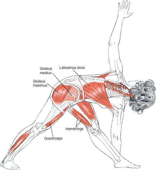 Fitness Inspiration : Parivrtta Trikonasana Leslei Kaminoff Yoga ...