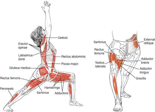 Fitness Inspiration : Warrior 1 - Leslie Kaminoff Yoga Anatomy ...